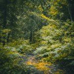 Nettoyage de la forêt