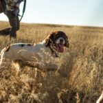 Ouverture de la chasse samedi 26 septembre