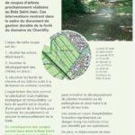 Coupes au Bois-St-Jean